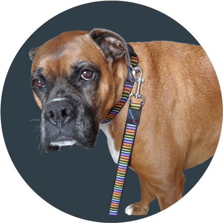 Picture for category Collars and Leads